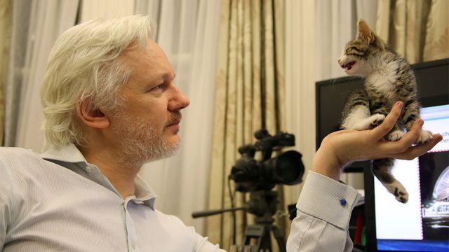 Julian Assange con su gato en embajada