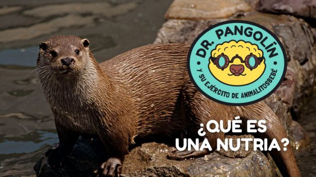 dr-pangolin-nutria