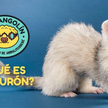huron-dr-pangolin-ejercito-animalitosbebe