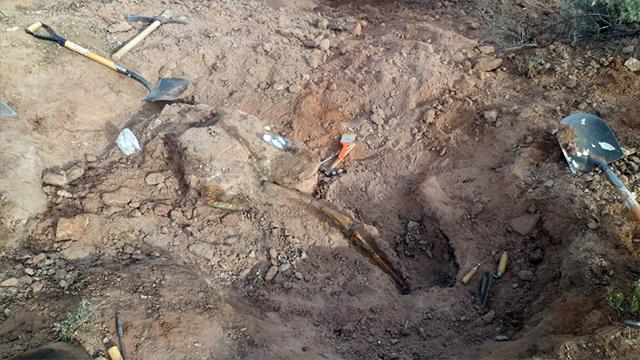 Dinosaurio, Argentina, Ornitópodo, Mahuidarcursor
