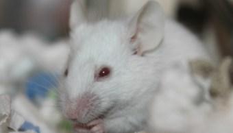 Cancer-Pulomones-Estomago-Raton