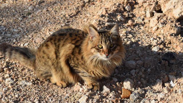 Gatos-Salvajes-Salchichas-Australia