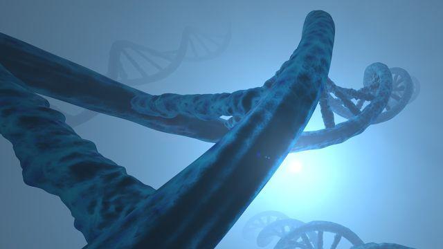 Genoma-Algoritmo-Bacteria