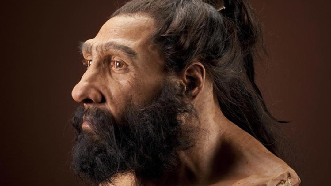Neandertal-Esterilidad