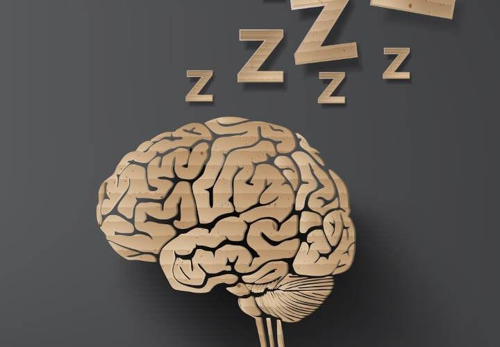 cerebro color café con letras z encima
