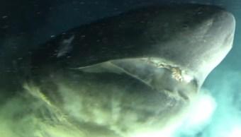Graban a Tiburón Prehistórico