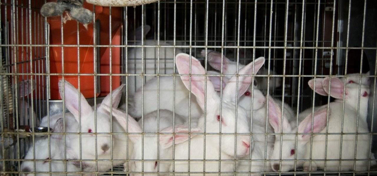 Activistas Veganos Granja de Conejos