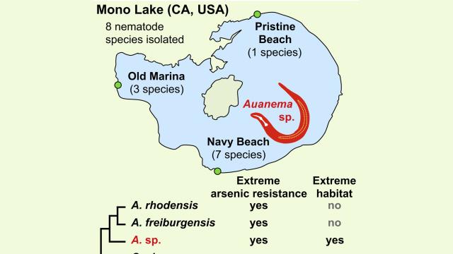 Mono Lake Warm