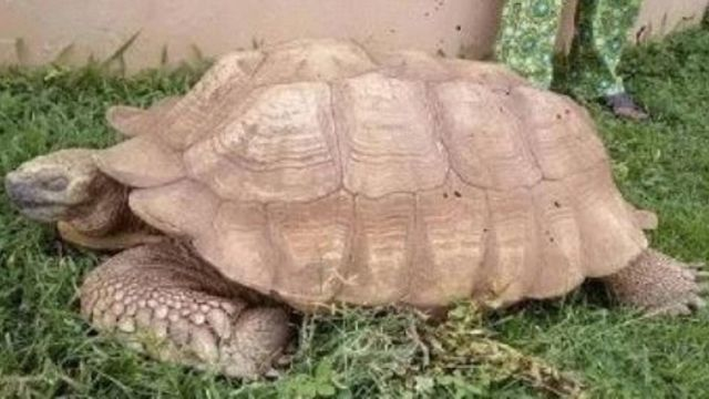 Muere tortuga más vieja del mundo