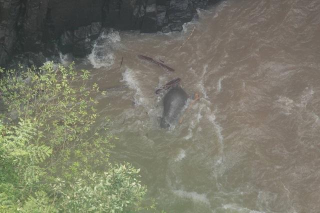 Muerte de Elefantes en Bangkok