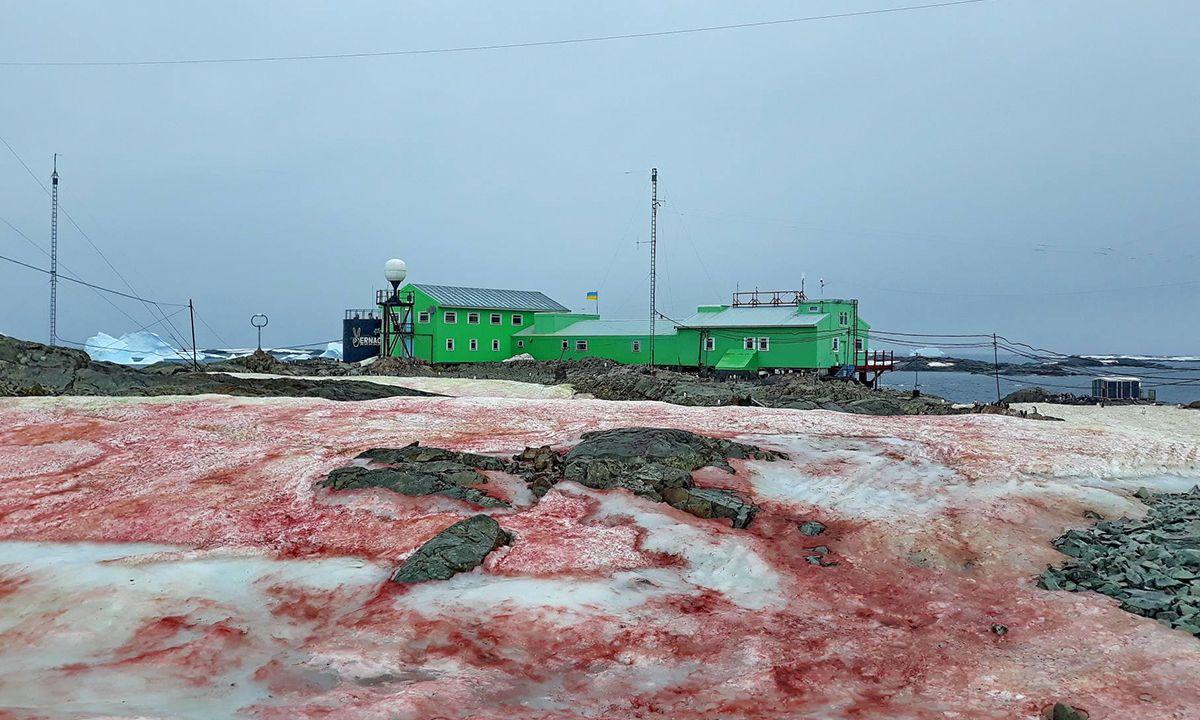 Nieve Roja Antártida