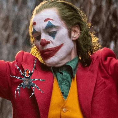 Nueva especie de araña Loureedia phoenixi Joker Joaquin Phoenix