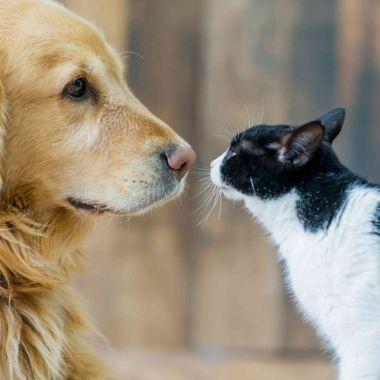 Adoptar Mascota Compañía