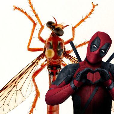 Nuevas Especies Moscas Nombradas Heroes Marvel (1)