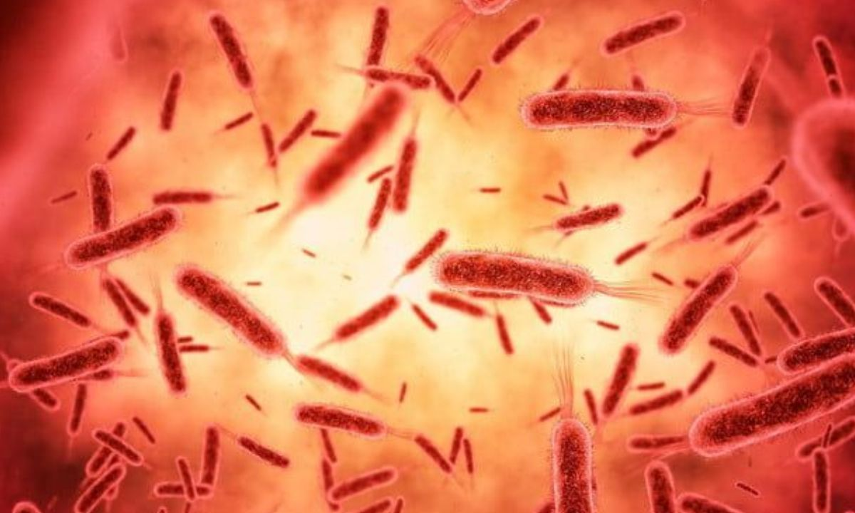 Reportan incremento acelerado de casos nuevos por Bunyavirus