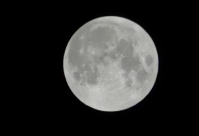 Foto Luna P40 Pro Plus
