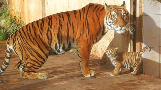 ¿Puedes tener animales exóticos y protegidos como mascotas?