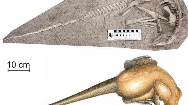 Paleontólogos descubren especie de dinosaurio preservado en lava volcánica