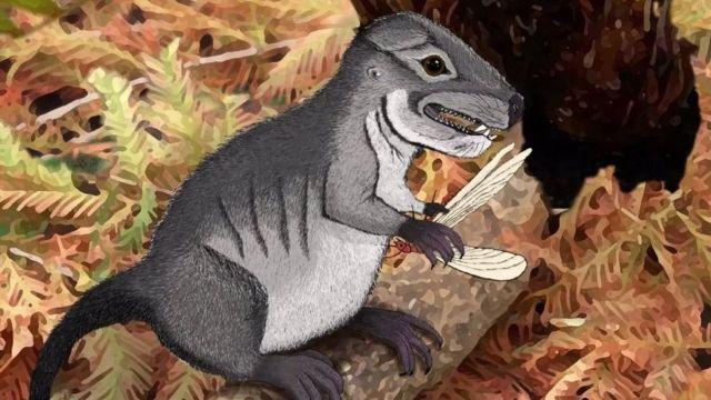 Científicos descubren el Kataigidodon