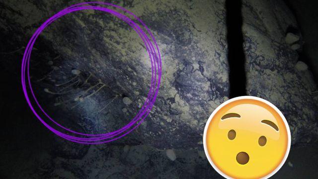 Encuentran extraños animales bajo el hielo de la Antártida