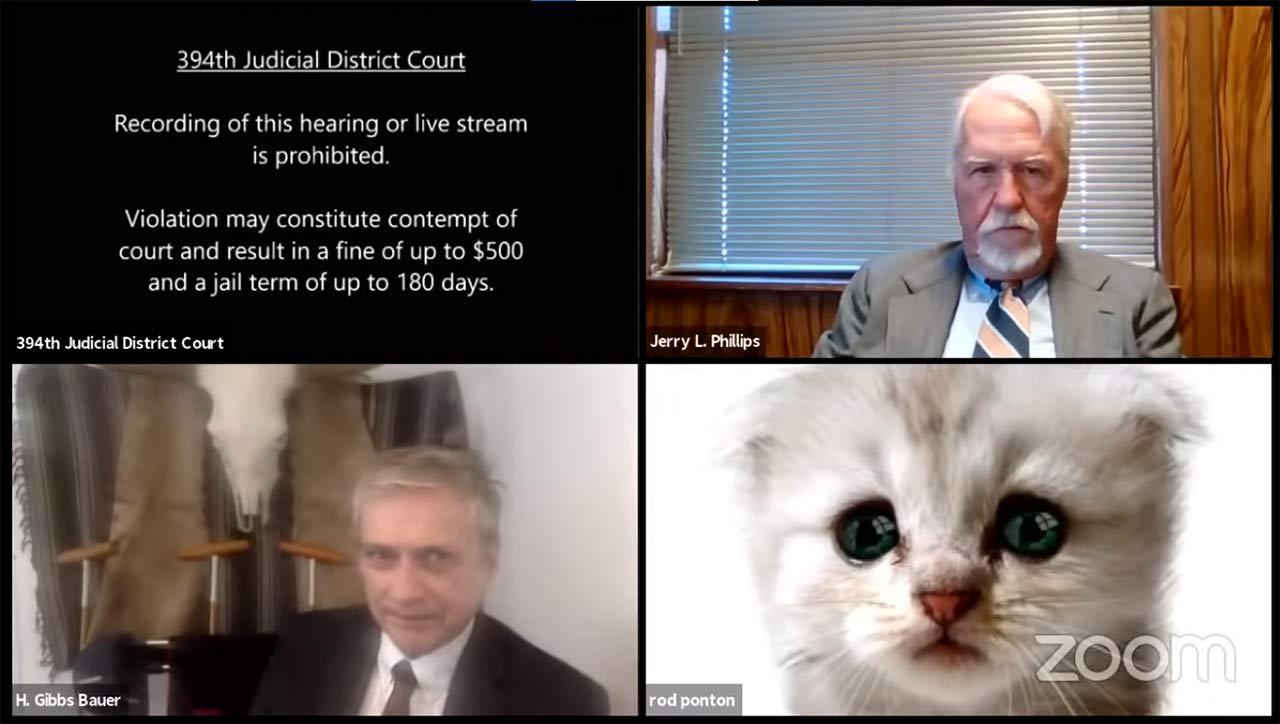 Zoom gato abogado