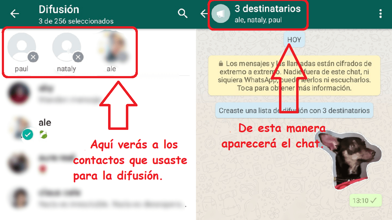 whatsapp chat difusión instructivo