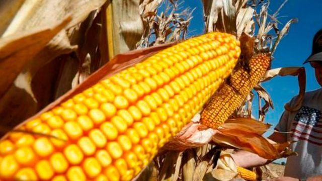 Bayer-Monsanto volverá a acatar la recomendación de disminuir el glisofato