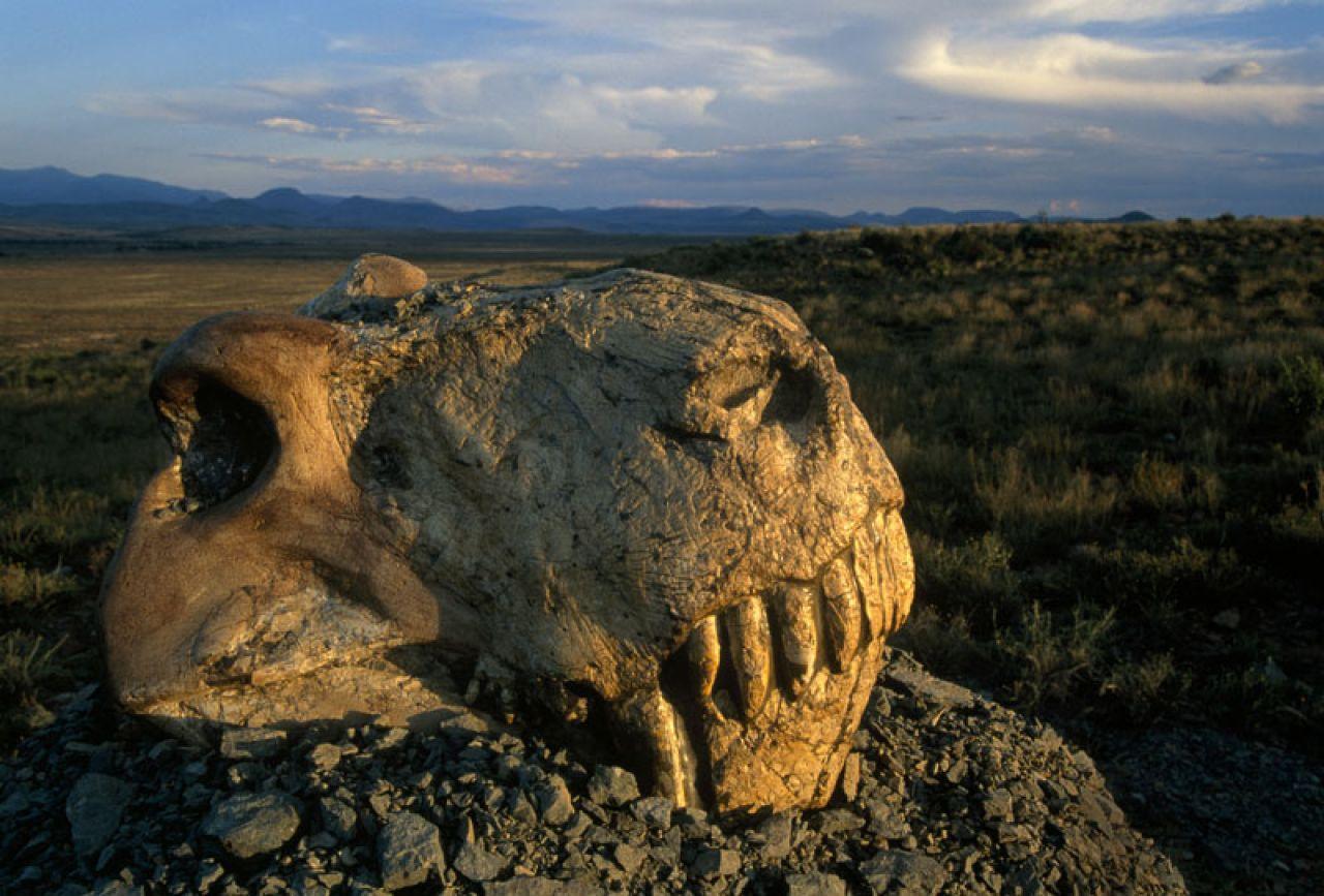 Extinciones masivas en la Tierra
