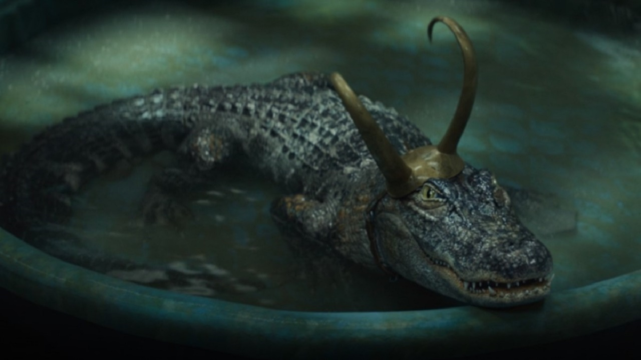 Alligator Loki Loki Serie Croki Cocodriloki
