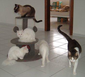 Arranhador para gatos, qual o melhor modelo?