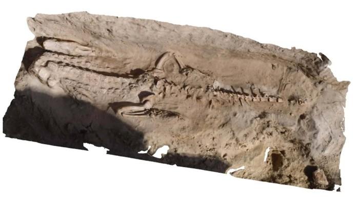 Reconstrucción 3D del cocodrilo encontrado en la necrópolis.