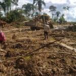 Devastación de tierras de la amazonía peruana, convertidas en plantaciones de aceite de palma