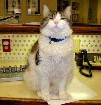 Oscar, el gato que predice la muerte