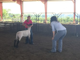 Judge Catharine Koroulis spending extra time after the show to help a 4-H member become a better showman.