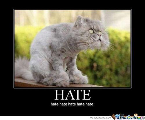 hate-cat