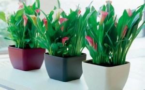 que-plantas-conviene-colocar-en-interiores-2