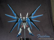 freedom0119