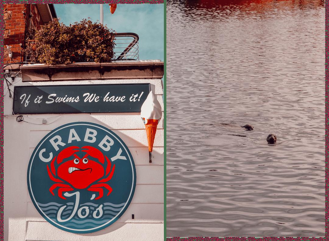 Un déjeuner à Crabby Jo's et des phoques au port de Howth à Dublin