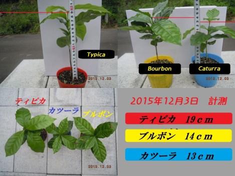 コーヒー3品種成長記録
