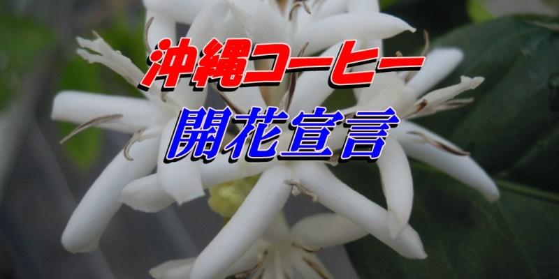アラビカ開花-2016