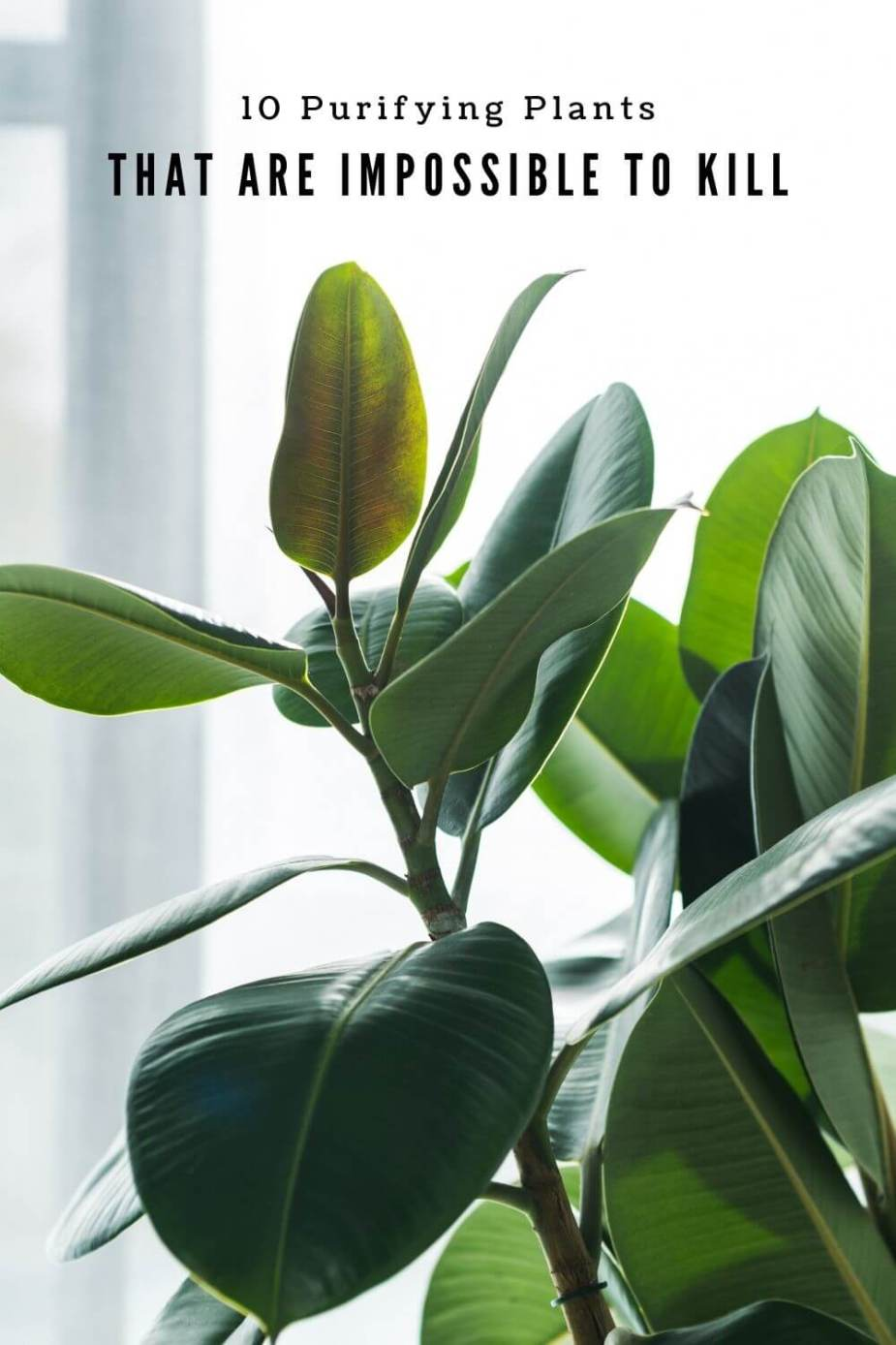 indoor plants that are hard to kill