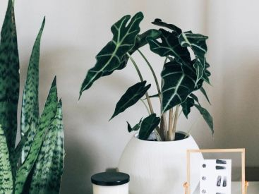 Indoor Plants 101 – a guide to thriving plant life