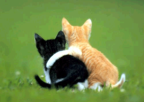 526e8-friendship_kittens