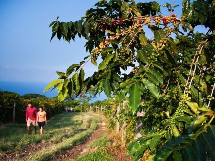 best kona coffee tour