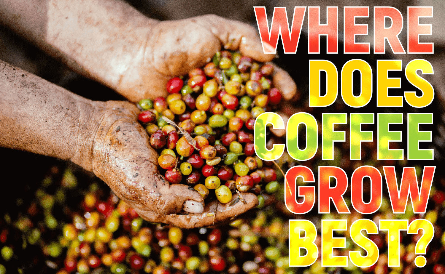 Where Does Coffee Grow Best?