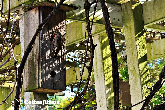 Monday Morning - mama bird feeding her chicks