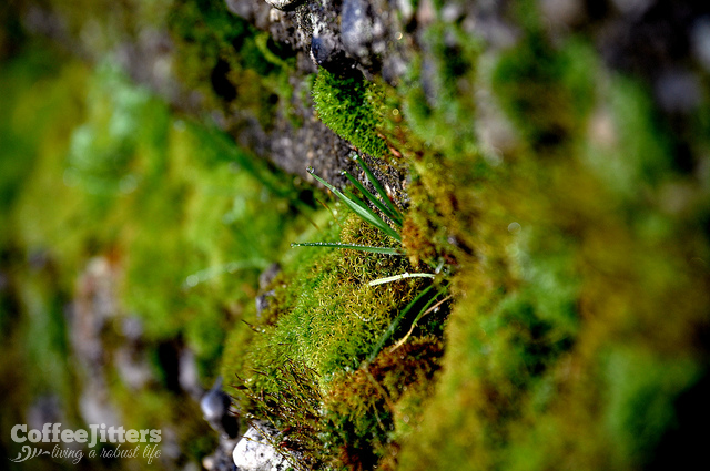 Letting the Moss Grow
