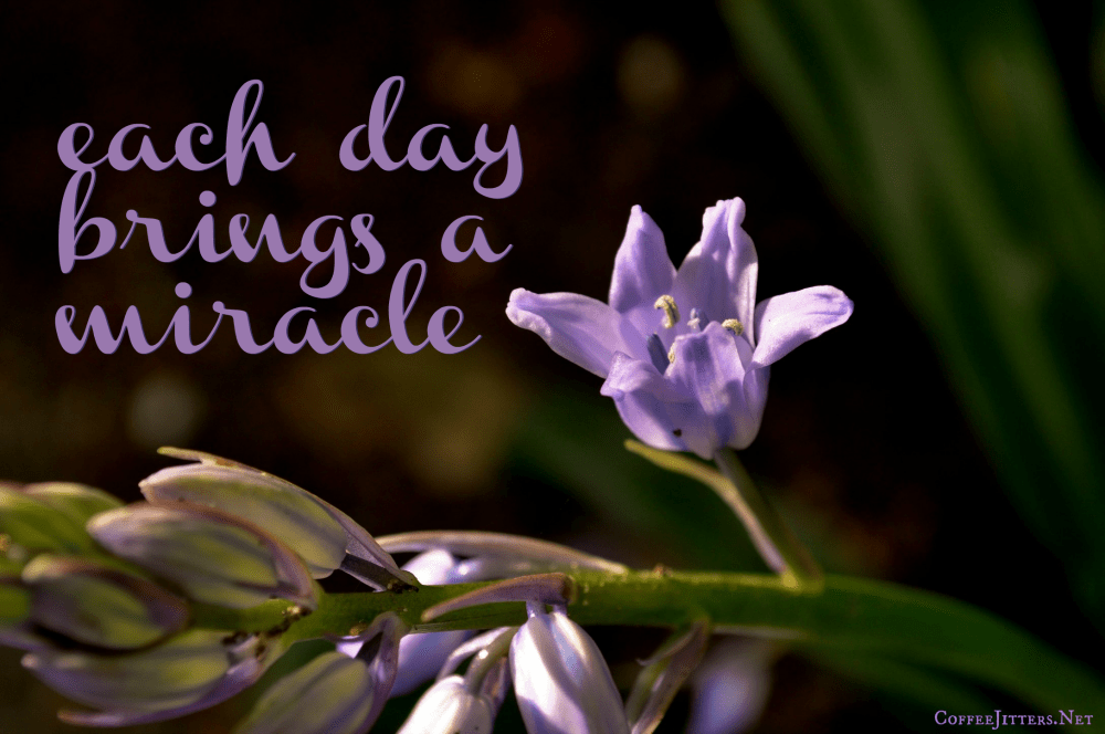 Each day brings a miracle