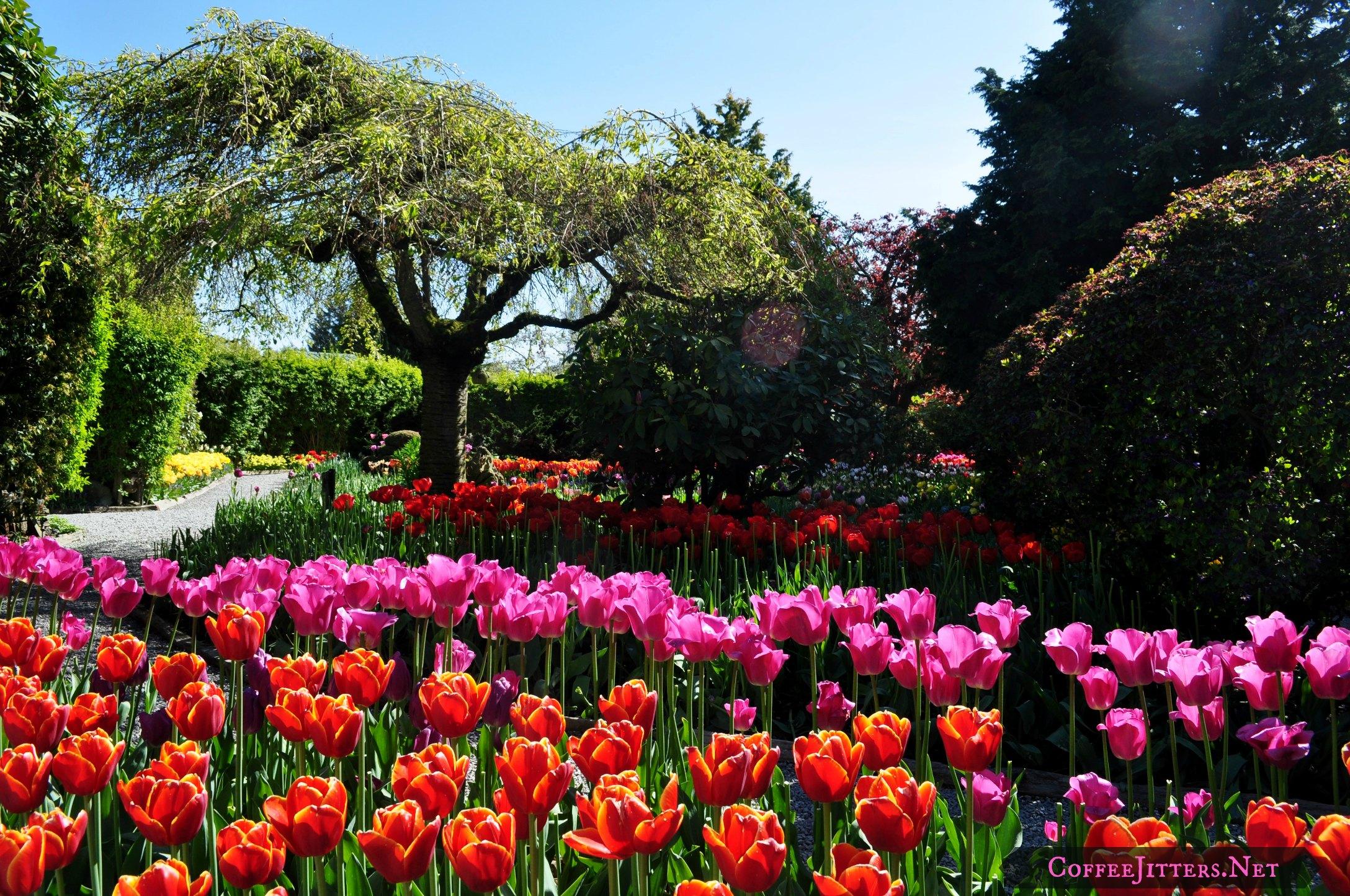 We tiptoed through the tulips