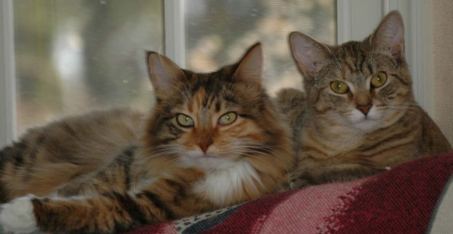 Here is an old picture of friends Mollie and Hazel.